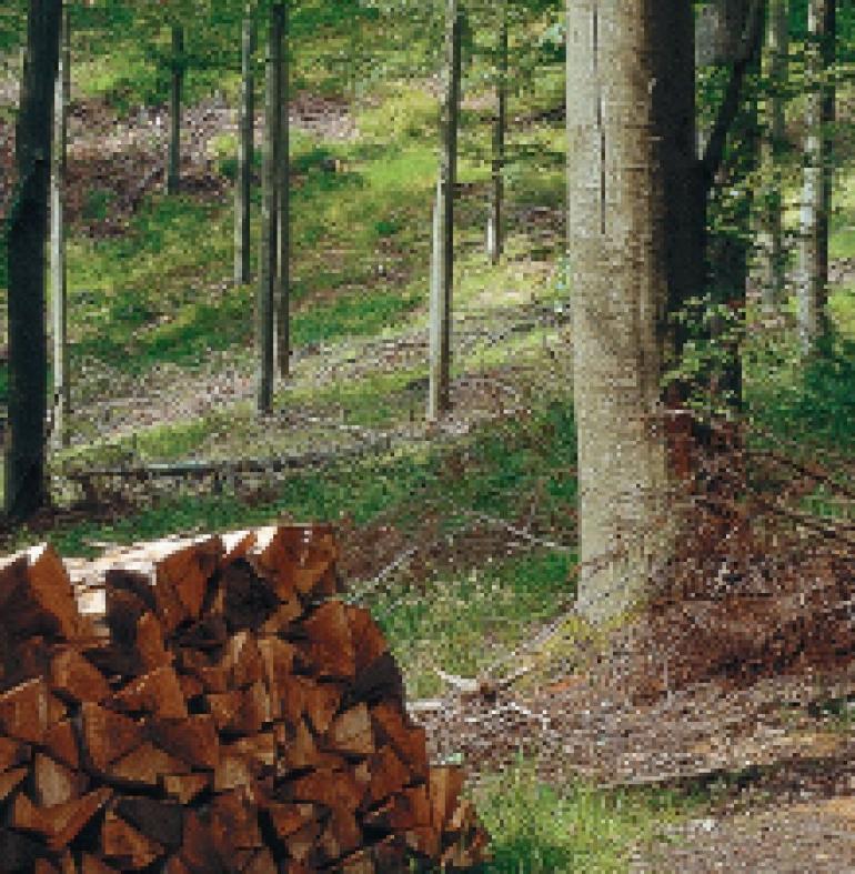 Il riscaldamento green a legna e pellet accende gli incentivi